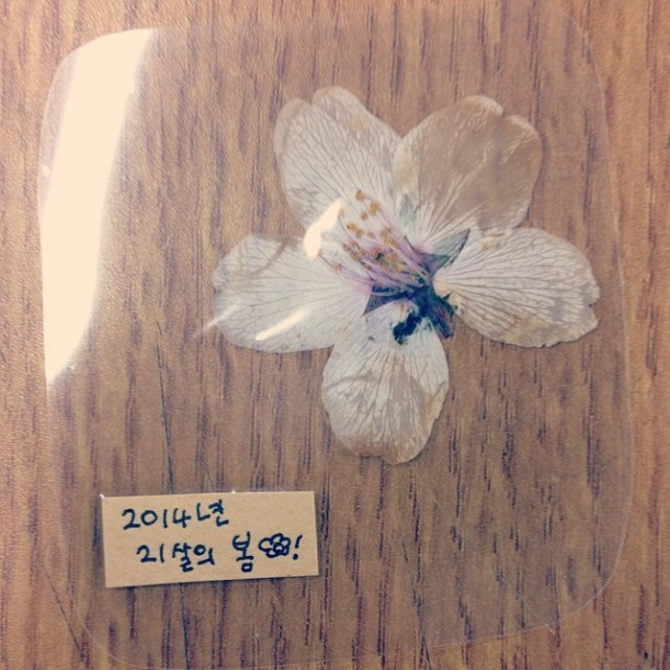 My classmate gave me this beautiful flower.