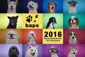 BAPS (Busan Abandoned Pet Sanctuary) est un établissement privé qui offre une maison aux chiens abandonnés en Corée du Sud depuis 2008. La fanbase GlobalMinzy a déjà travaillé avec BAPS auparavant, l'an dernier ils ont fait un don de $583 soit 550€ dans le cadre du projet 'Paws Up for Minzy' pour le 22ème anniversaire de Minzy. Cette année, nous retravaillons avec BAPS car nous voulons refléter l'amour et la compassion qu'a Minzy pour les chiens. BAPS produit un calendrier 2016, grâce à vos dons, nous achèterons un calendrier qui sera envoyé à Minzy, qui sera accompagné de la liste des fansites qui ont participé ainsi que le nom des donateurs qui iront participer à ce projet.