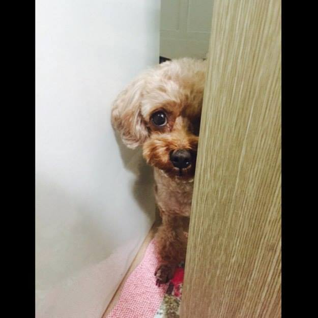 Minzy: Où essaies tu d'aller!! #RegardNoir Je te surveille. #NeMeLaissePasSeule